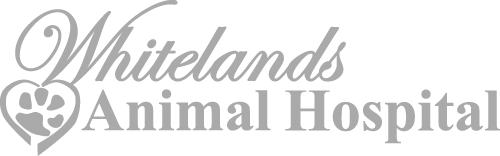 Whitelands Animal Hospital
